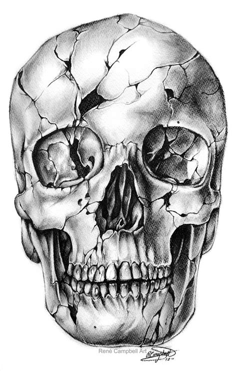 Skull drawings by René Campbell