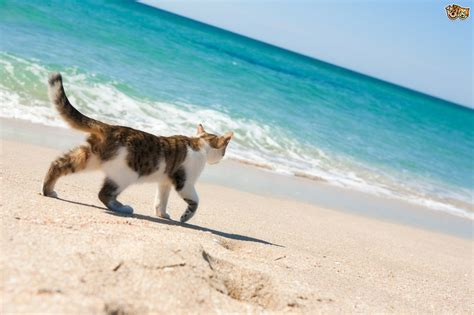 10 Amazing Cats That Travelled Vast Distances To Be With
