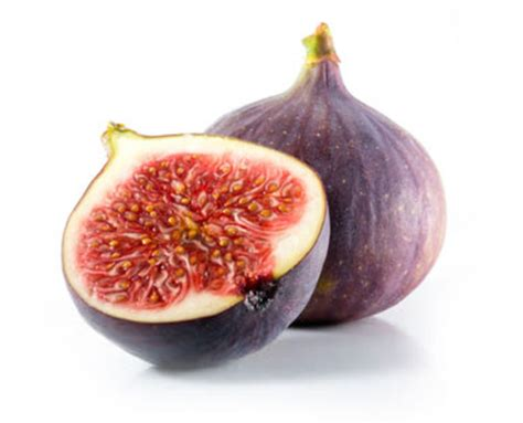 Clipart Of Fig Tree With Fruits | Free Images at Clker