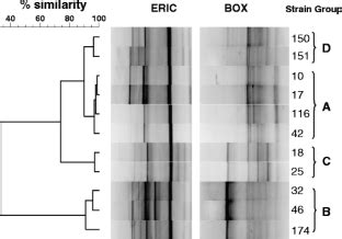 Characterization of a Clavibacter michiganensis subsp