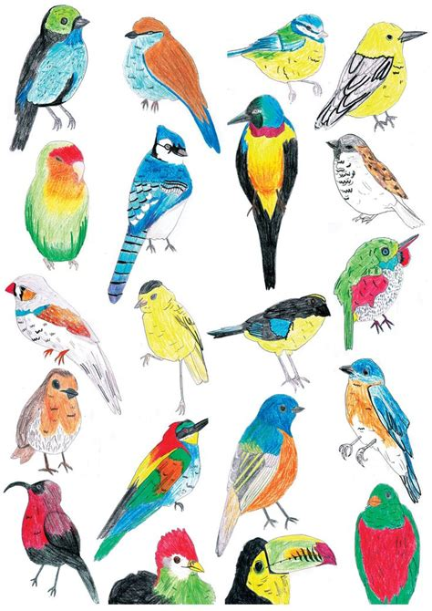 Selling parrots clipart - Clipground