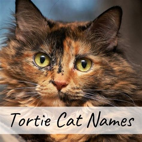400+ Cat Names: Ideas for Male and Female Cats | Cat names